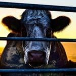 Check out our list of the best documentaries that changed the way the world looks at food, from 'Cowspiracy' to 'Jiro Dreams of Sushi'.