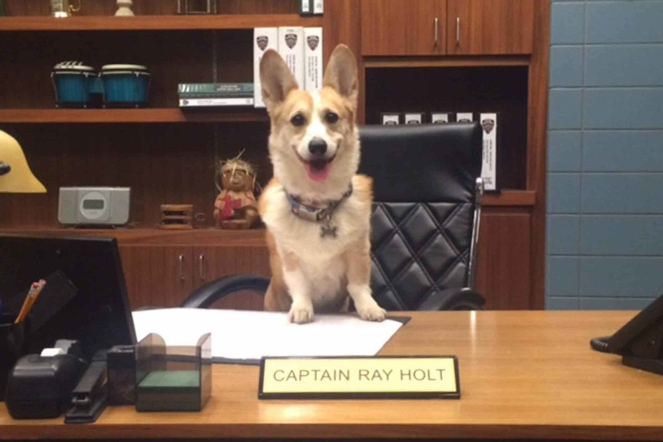 Cheddar Holt has passed. We revisit the legacy of the good dog from 'Brooklyn Nine-Nine'.
