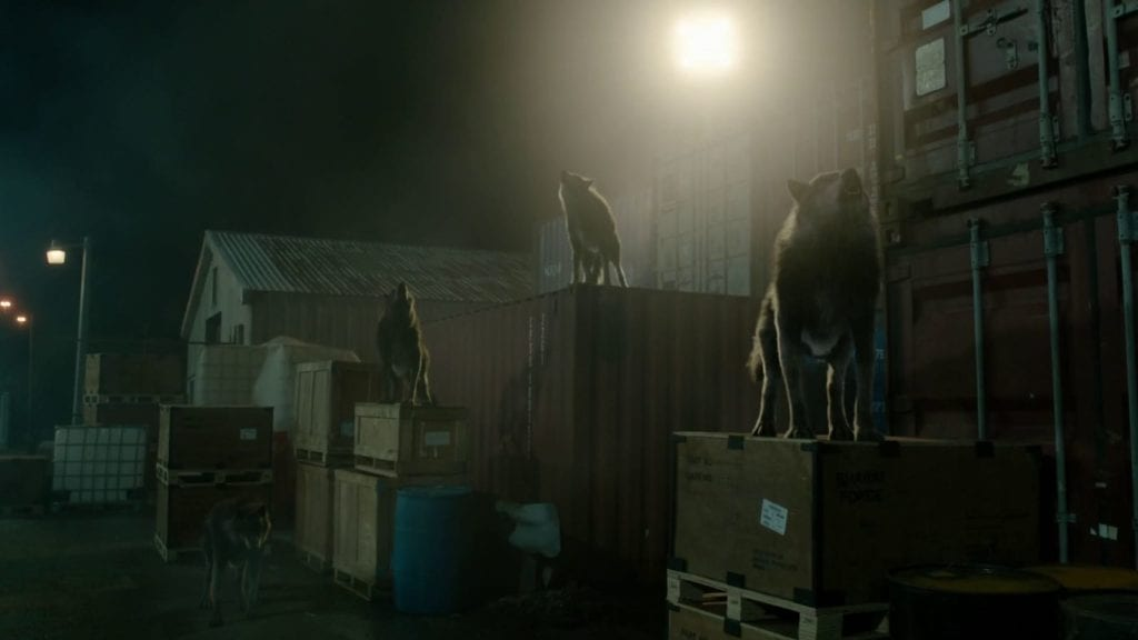 Shadowhunters Werewolves