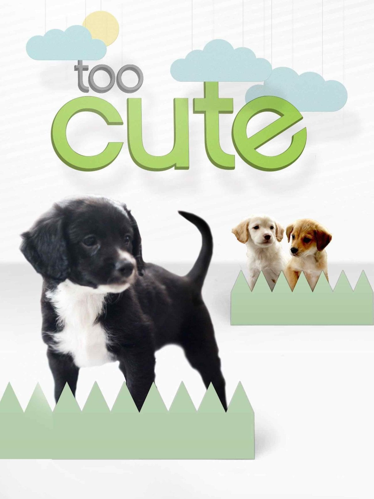 The world is slowly descending into chaos. That's where 'Too Cute!' and their puppies and kittens comes in. Here's why 'Too Cute!' is the show we all need.