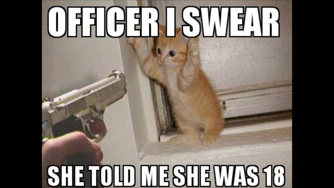 Check Out These Funny Cat Memes To Help You Through Quarantine Film Daily