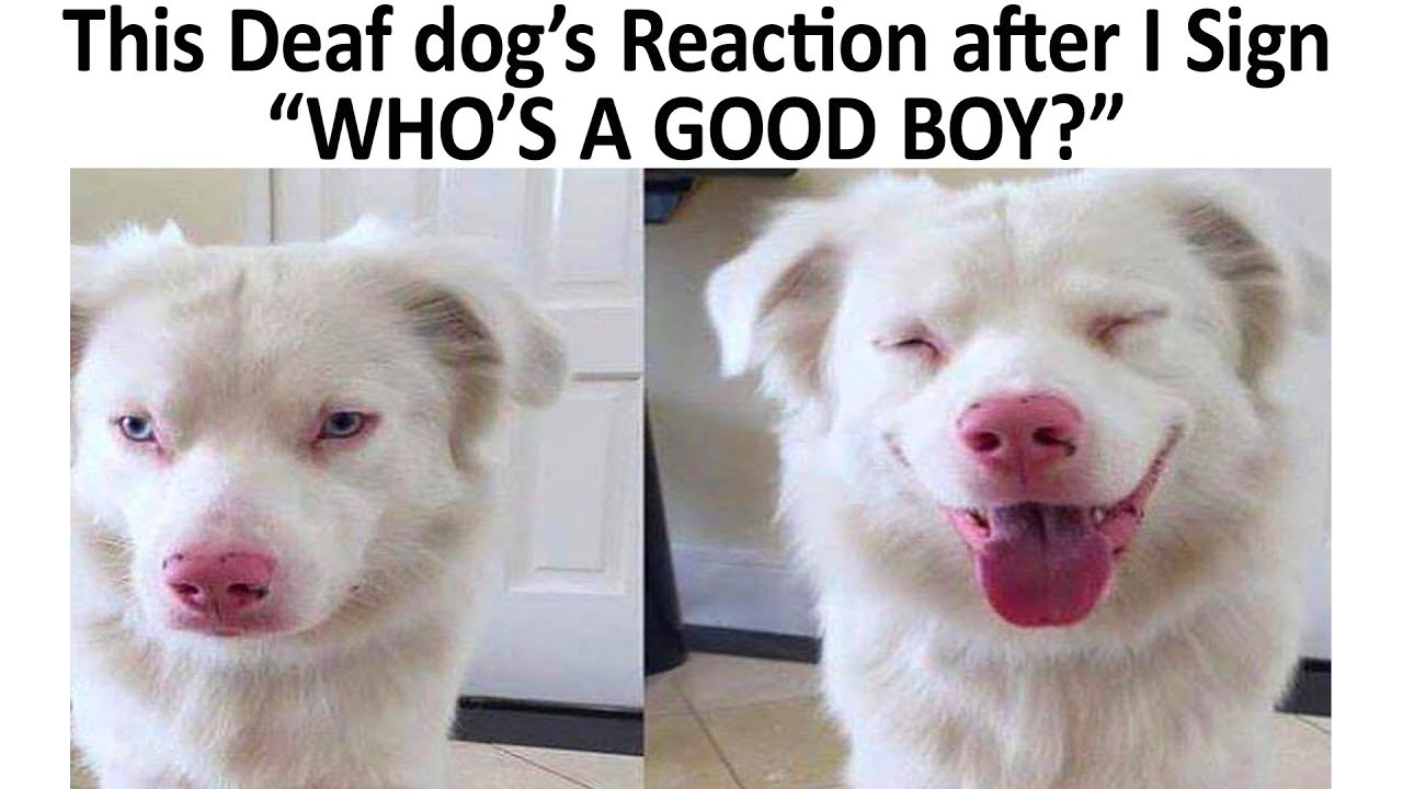 Here Are All The Funniest Dog Memes For Your Quarantine Film Daily