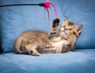 Whether adult or kitten, give it a shot to see if your furry overlord will want to play with you. Here are 5 games to play with your cat indoors.