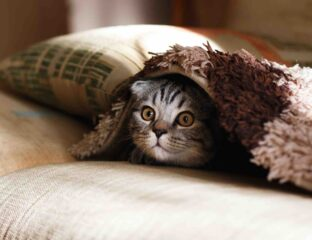 Cats have been an invaluable source of quarantine giggles, as well as role models on how to chill at home 24/7. Enjoy these funny cats!