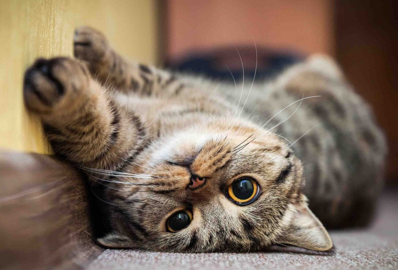 Cats! Long worshipped, very independent, but always there in the clutch when you need some kitty loving. Here's our cutest cat videos.