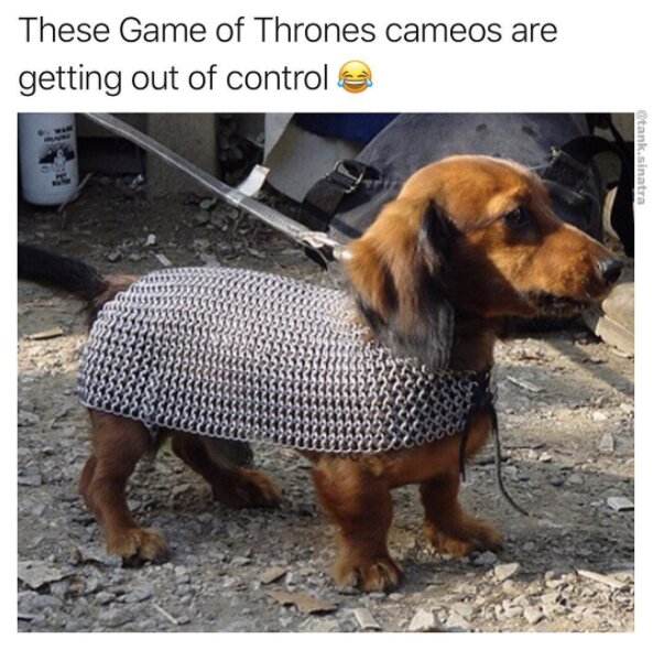 Wag your tail at these funny dog memes this quarantine ...