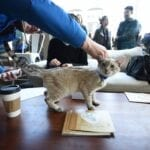 a trip to one of the best cat cafes is definitely in order once you're free of quarantine. We recommend these cat cafes!