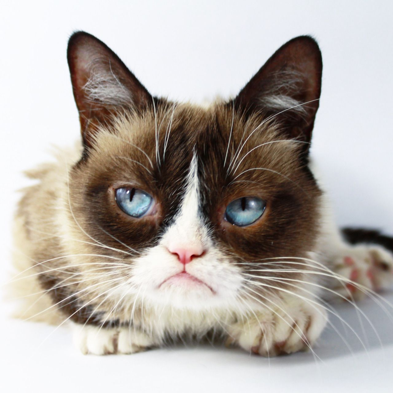 In order to remember the viral legend of Grumpy Cat, we've put together a list of the best memes to celebrate her life.
