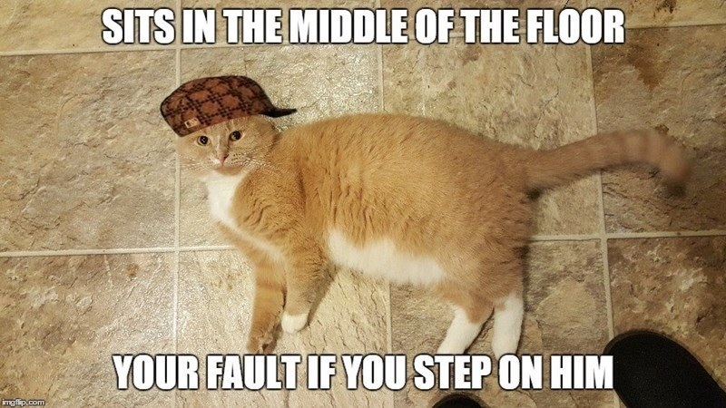 We like to believe that we own our cats, but our cats own us. If you don't believe us, check out these funny cat memes to open your eyes to the truth.