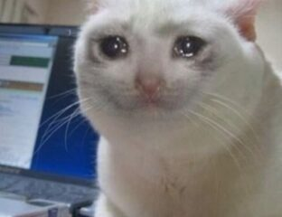 Crying cat, a meme that was first generated in 2014, is becoming one of those classic memes that never truly dies off. Here are the best crying cat memes.