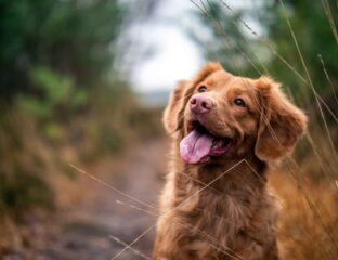 There's nothing better than living with a dog. Here are a few quotes from some like-minded people for you to see which ones you relate to.