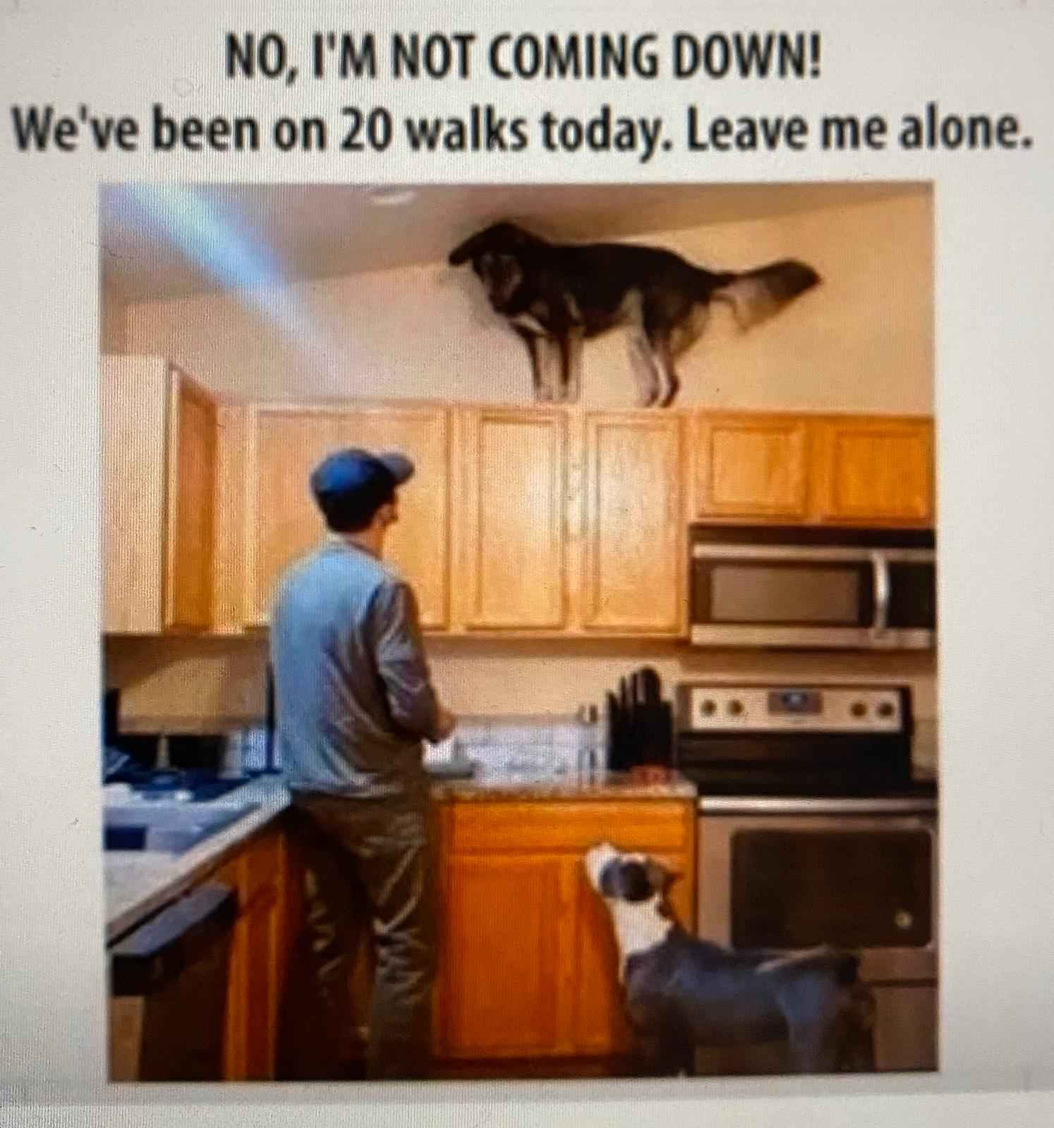Pets: they're the best thing to get stuck inside with during quarantine. But that does't mean coronavirus isn't driving them crazy. These memes prove it.
