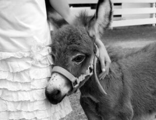 Baby donkeys are here and they are cute and we should never stop looking at them. Here are a few of our favorites.