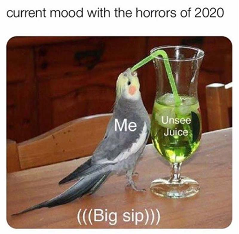 The Most Cursed Memes Of 2020 Exactly How We Re All Feeling Film Daily