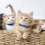 Today is National Kitten Day! A lovely day indeed, to celebrate our tiny, furry, feline friends. Listen to these kittens meowing.