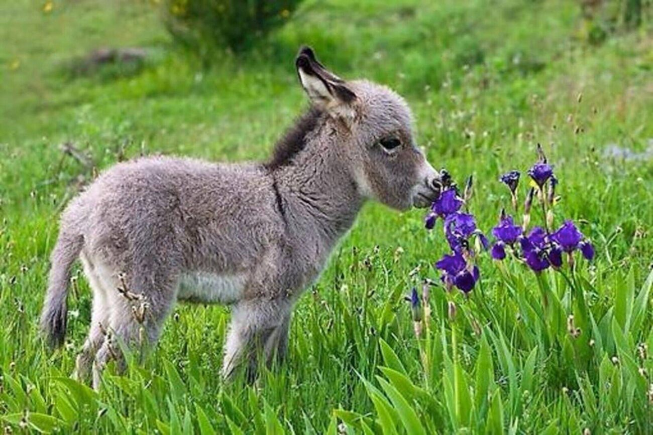 It may be easiest to get a dog or cat as a pet, but have you considered getting a baby donkey? Watch these baby donkey videos – you'll soon be smitten.