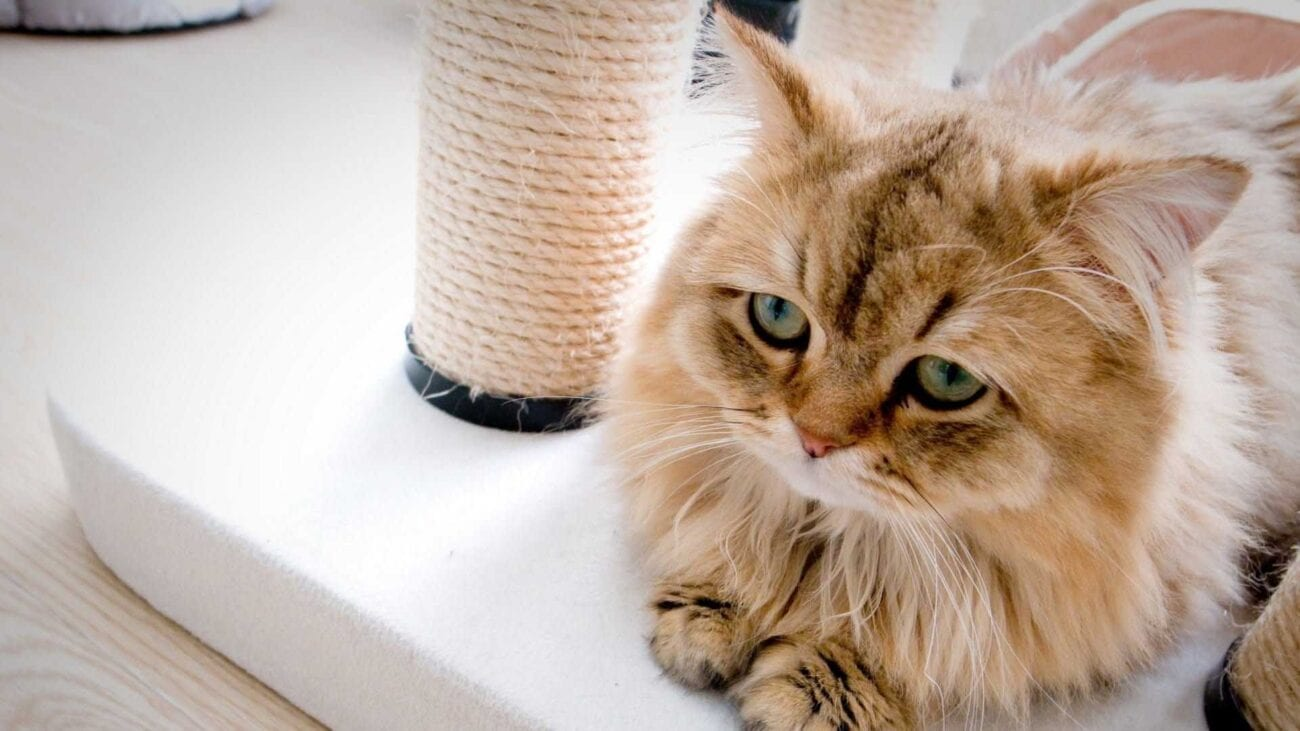 Need a lift to your spirits? Check out these cats who are also having a tough time existing in the world. They're sure to make you giggle.
