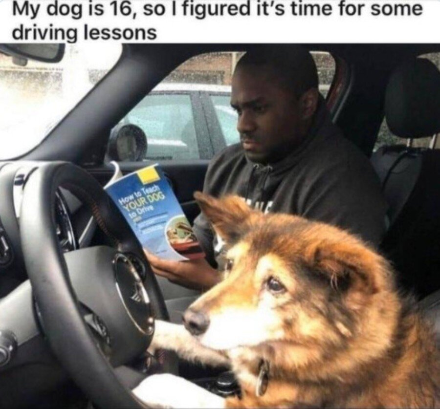 Enjoy Some Of The Most Popular Wholesome Memes On The Internet Film Daily