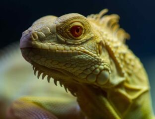 Lizard people are supposedly reptilian half humans that reside on earth as important political figures. Here's what we know about the conspiracy.