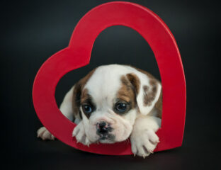 Let's face it, quarantine is lonely, even for our dear puppies. Help your puppy find love with this
