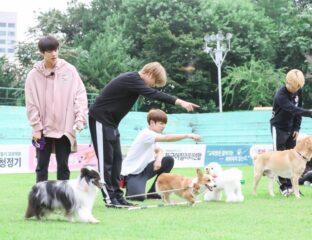Sólo hay una cosa más linda que los miembros de BTS: sus perros. Checa todas las fotos de ellos con sus mascotas.