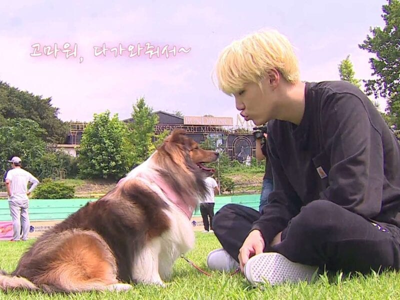 What's cuter than all the members of BTS? Well, BTS in pictures of their dogs, of course! Here are some of our favorites.