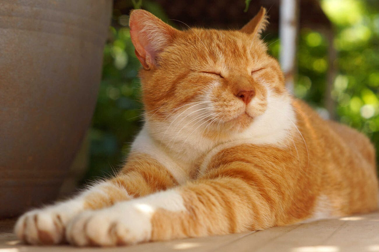 It's not always easy to earn a cat's love. Here are some proven tricks to make cats smile.