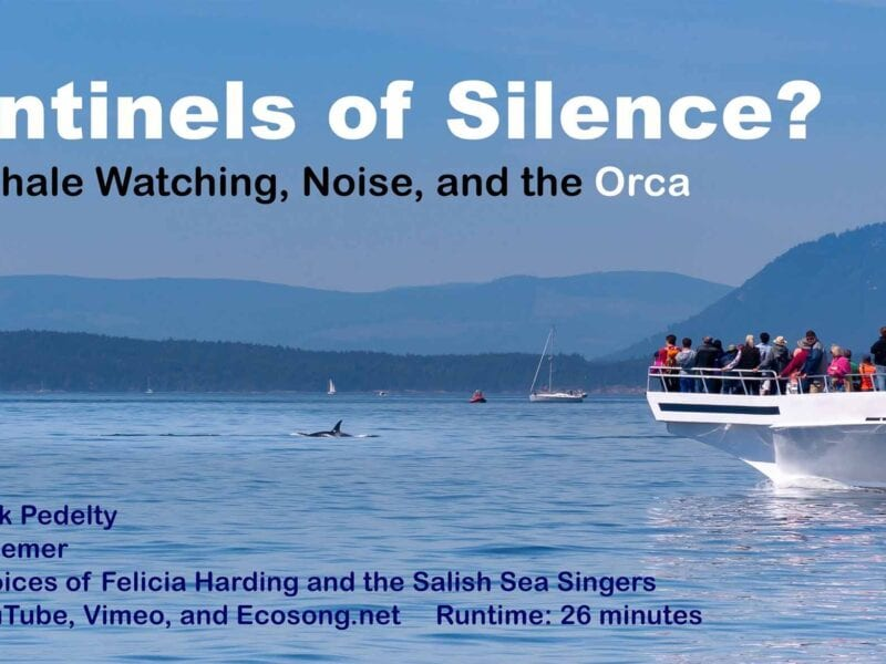 Mark Pedelty addresses environmental controversies through media. His latest doc 'Sentinels of Silence' follows the trend taking on whale watching.