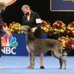 The National Dog Show had an incredible selection of winners this year. Here are the best dogs in show for the 2020 competition.