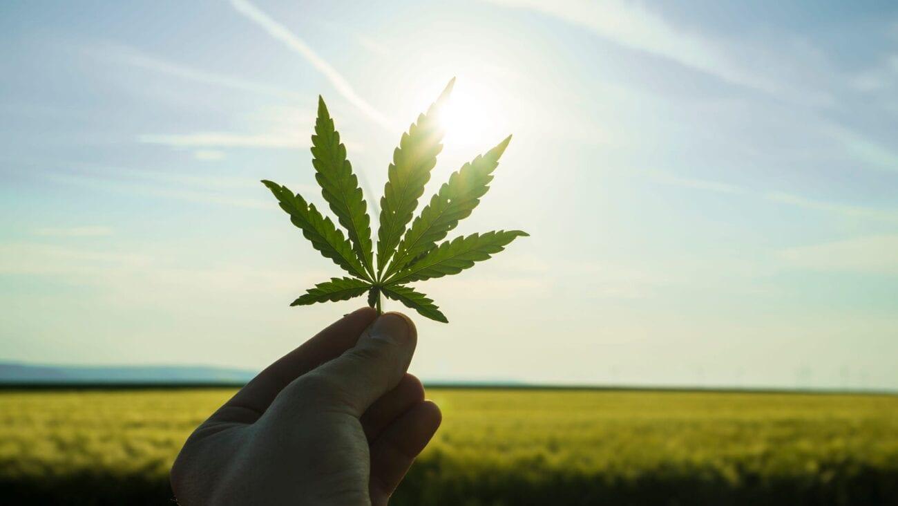 ¡Por fin podrás meterte tus marihuanas en paz! Celebra viendo estos memes sobre la despenalización.