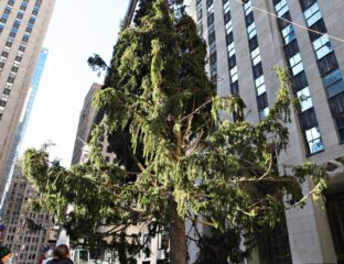 In New York tradition, Rockefeller Center decks the halls with a seventy-five-foot Christmas tree. Does it truly sum up 2020?