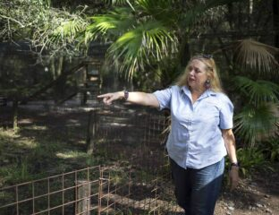 A Big Cat Rescue Tampa volunteer was mauled by a tiger as she stuck her hand in the cage. Is the wildlife sanctuary dangerous?