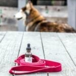 CBD oil products have several health benefits for household pets. Find out what these products can do for your dog.