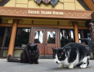 Disneyland will have many available jobs once the pandemic is over, except on their rodent task force. Read all about their 'cats members' before applying.