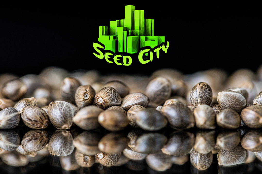 Looking for a reliable online store to buy cannabis seeds? Visit Seed City for a great selection of seeds for a great price.