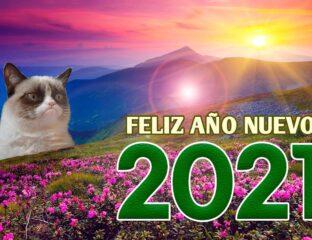 Satura el chat familiar con estas imágenes de fin de año y haz que tus tías empiecen el 2021 riendo a carcajadas.
