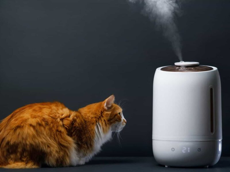 Are humidifiers a good idea for cats? Find out whether the air filtration system is safe for your house pet.