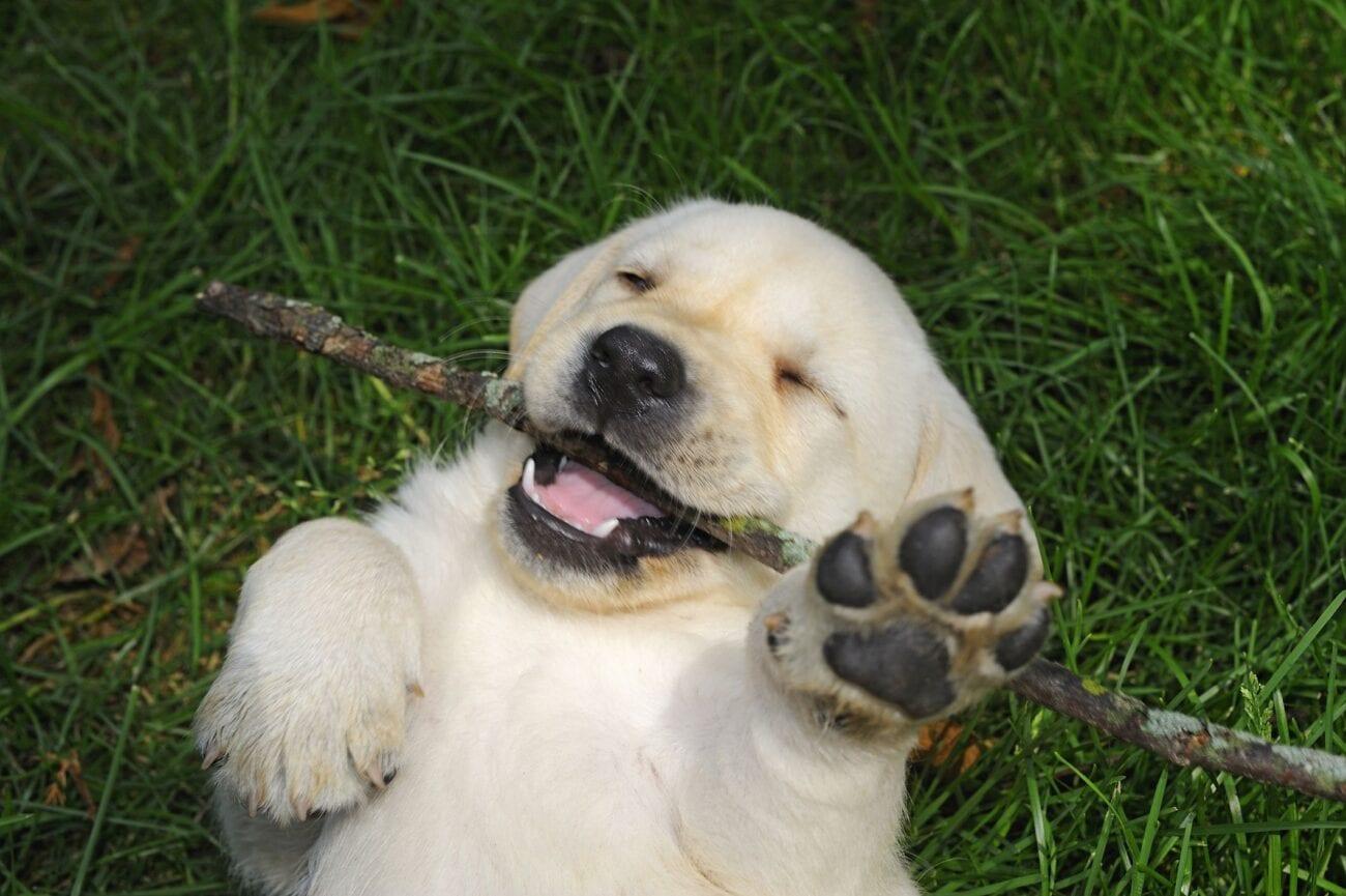 Que nunca nos falten suaves lomitos para alegrarnos la vida. Ríete con los memes más divertidos y peludos de perros.