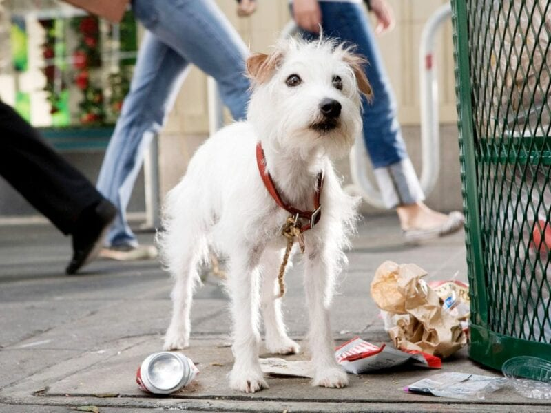 Since 2020 made us cry, we found some dog movies guaranteed to put a smile on your face. Here are some of the best.