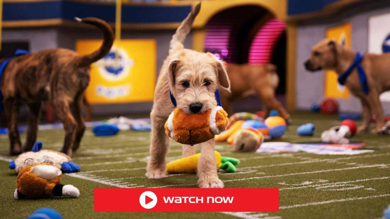Here you can find everything about the Puppy Bowl 2021, live stream, date, time and many more.
