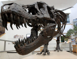 Are your kids bored in quarantine? Show them some dinosaur TV shows. Here are some shows made for little kids or the whole family.