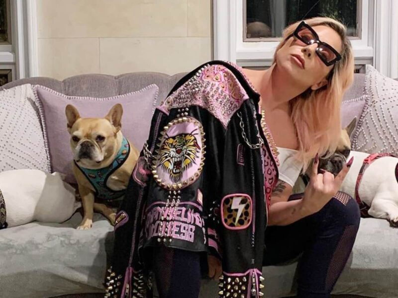 Lady Gaga has a net worth of millions of dollars. Is that enough to get her stolen puppies back? Learn all about the recent dog-napping scandal!