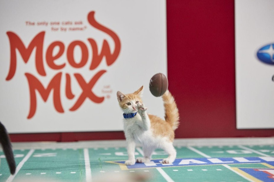 Kitten Bowl VIII airs on Sunday, Feb. 7 at 2 p.m. There are several ways to watch with a free live stream.
