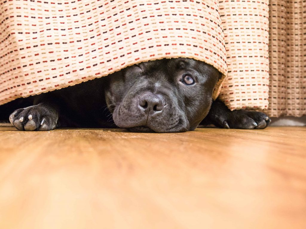 Some dogs like to sleep under the bed. Discover whether your dog fits the bill and why they like to do it.