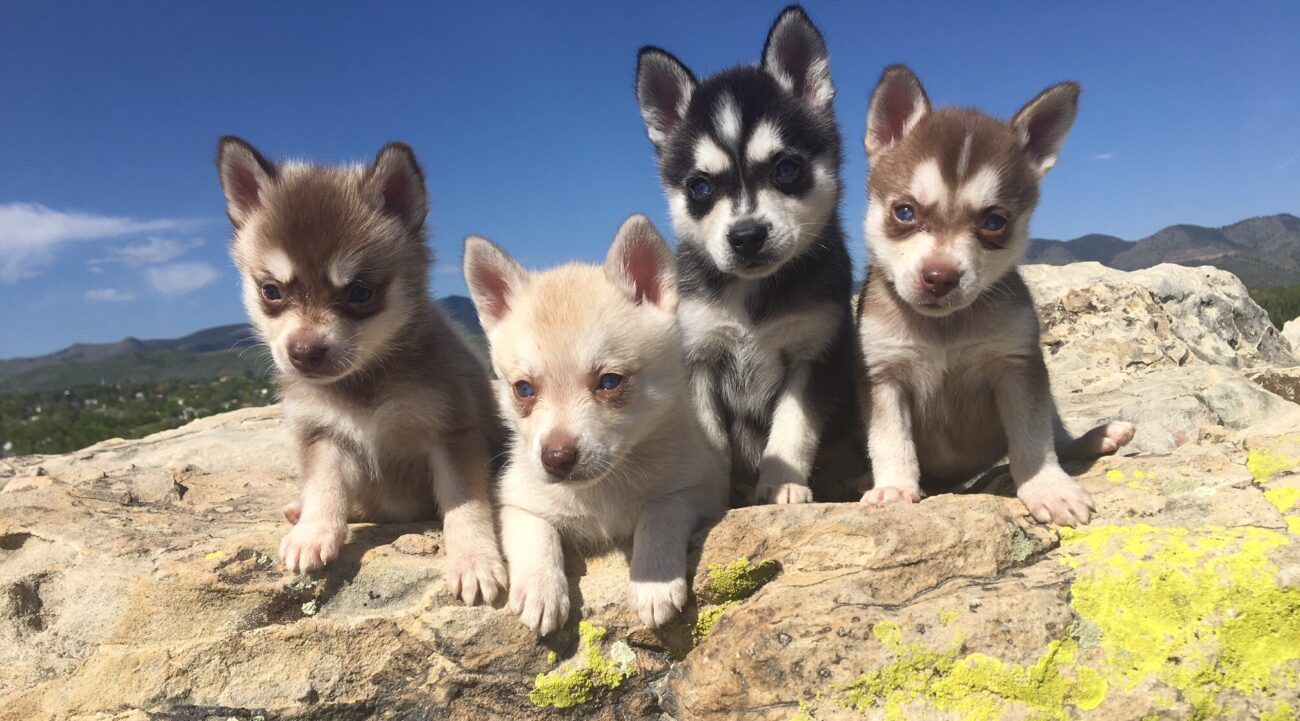 Dogs are some of the cutest animals out there. Check out 7 of the most adorable photogenic dog breeds that will leave you speechless.