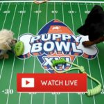 It's time to celebrate the Puppy Bowl. Learn how to live stream the 2021 pet event on Reddit for free.