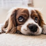 Puppy pads are useful for pet owners. Find out why its actually has benefits outside of potty training.
