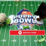 Puppy Bowl is here. Find out how to live stream the adorable pet sporting event online for free.