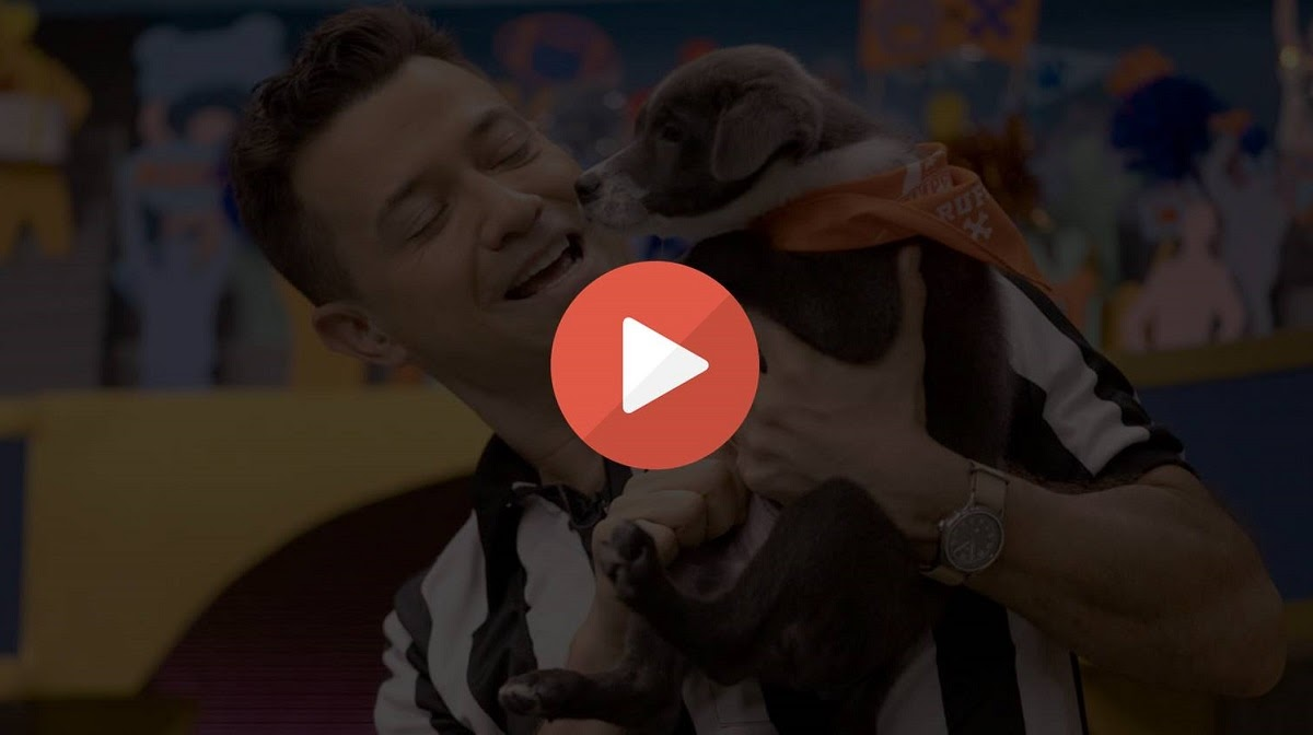 The annual puppy bowl is the cutest game of the year. Take a look at the best ways to stream this adorable game filled with puppies and kittens.