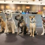 Dogs can be movie stars too. Here are some tips on how to train dogs to appear in Hollywood movies.